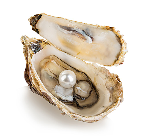 wie entstehen perlen